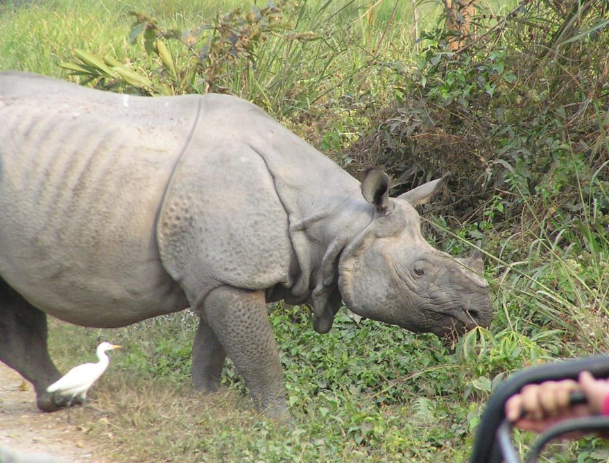 Disturbed by our jeep safari