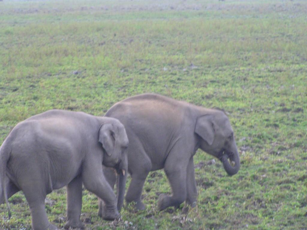 Babu and Rani...the baby elephants