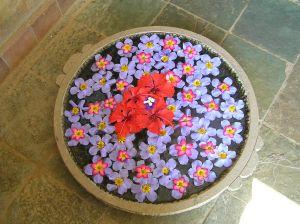 Aurobindo ashram welcome urli