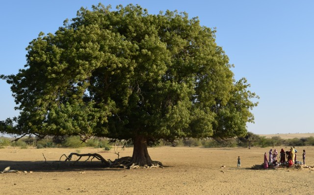 well near the century old tree
