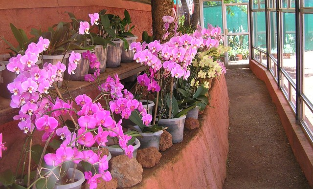 Orchid cultivation