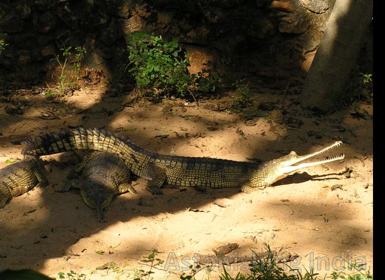 Lazing around in shade