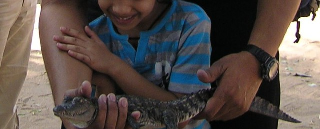 With Crocodile baby