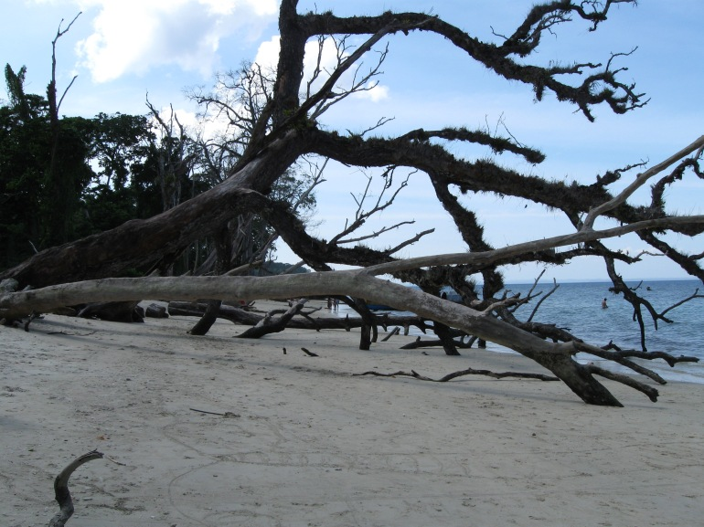 Fallen trees at the Elephant Beach