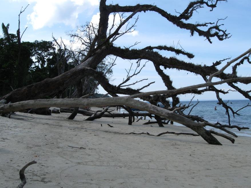 Fallen trees at the Elephant Beach