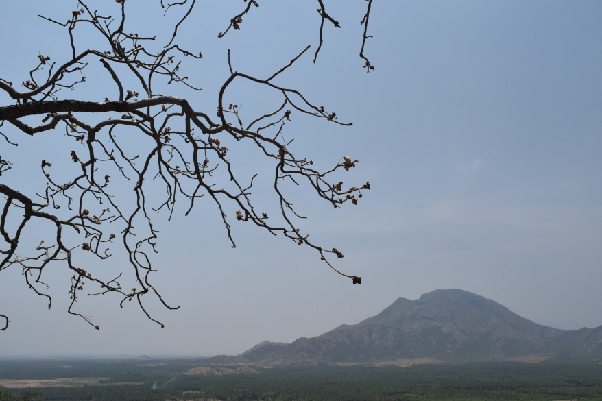 Beauty lies in eyes of beholder...a rustic dry tree