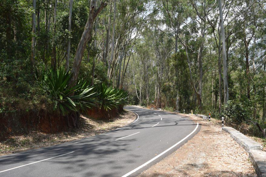 Eucalyptus all the way