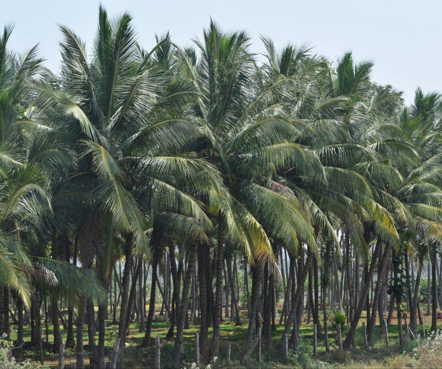 Coconut grove...so near yet so far