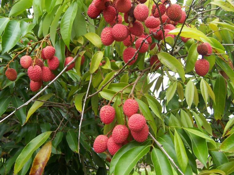 green lychees