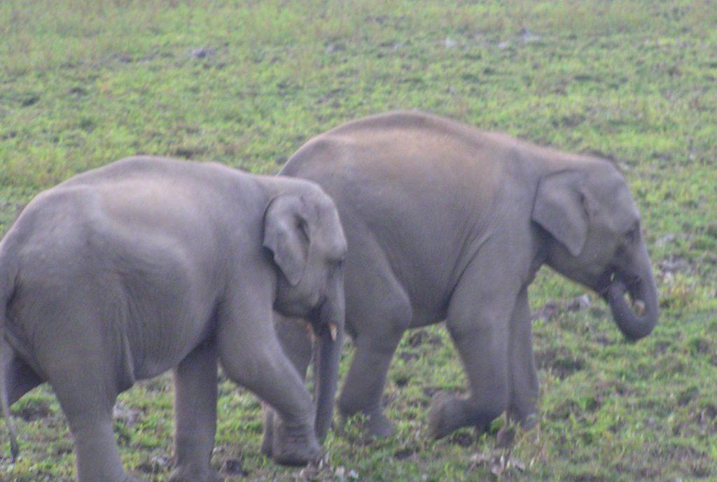 Babu and Rani playing