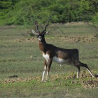 A Day At Muthupet Mangrove and Point Calimere Wildlife and Bird Sanctuary