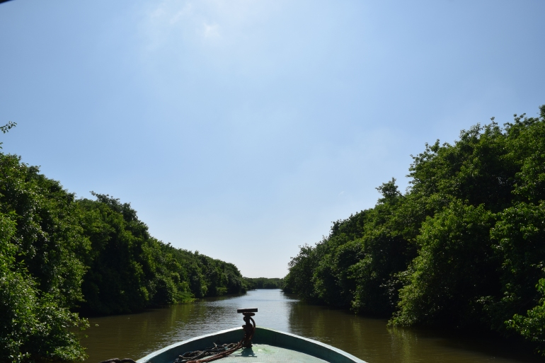 Sailing through one of the stream at mangrove forest