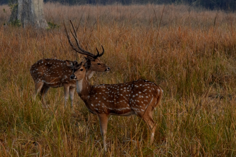 Spotted deer in the park