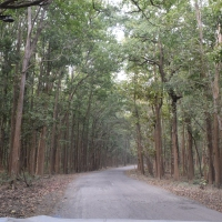 In Photos: Jim Corbett National Park
