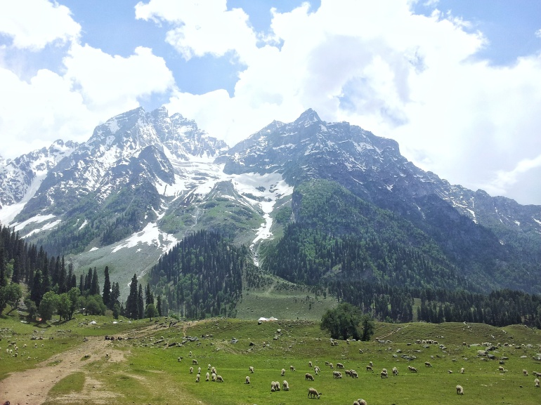 Kashmir Valley. Pic by Mayuri Patel