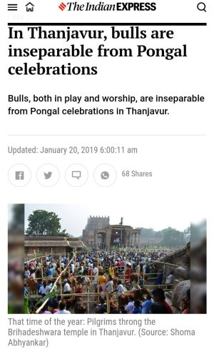 Mattu Pongal, indian Express