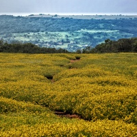 Why You Should Visit Kaas Pathar, The Plateau Of Flowers in Satara, Maharashtra