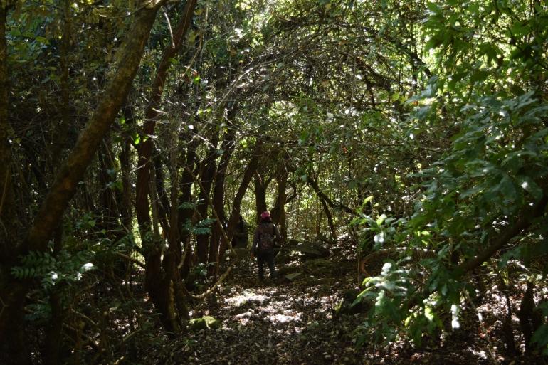 Trek through forest